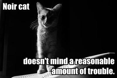 noircat1.jpg
