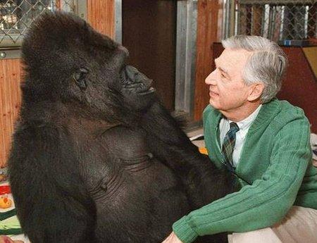 Fred and Koko